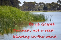 Be Gospel Trained Not a Reed In The Wind